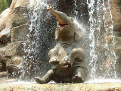 baby elephant in waterfall | Just a baby elephant sitting under a waterfall while shooting water ...