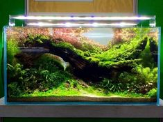Planted Aquarium, Tropical Fish Aquarium, Nano Aquarium, Nature Aquarium, Aquarium Design, Aquarium Fish Tank, Fish Tank Terrarium, Goldfish Tank, Fauna Marina