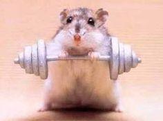 Lifting Weights!