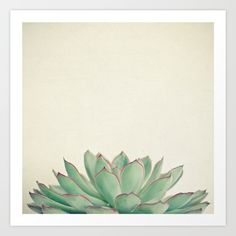 Buy Echeveria Art Print by Cassia Beck. Worldwide shipping available at Society6.com. Just one of millions of high quality products available.