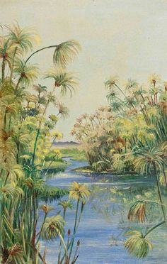 Painting by Marianne North Papyrus along the River Margins