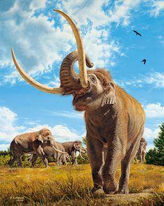 """Elephas antiquus""   LEA UN INTERESANTE ARTÍCULO SOBRE ESTE TEMA EN EL SIGUIENTE ENLACE: http://wol.jw.org/es/wol/d/r4/lp-s/102009169#h=20:2-20:213   ---  jw.org/es  ""Elephas antiquus""   YOU ARE INVITED TO READ AN INTERESTING ARTICLE ABOUT THIS TOPIC IN THE FOLLOWING LINK:  http://wol.jw.org/en/wol/d/r1/lp-e/102009169   ---  jw.org/en"