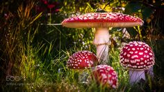 Fungus fable by Vahlenkamp #fadighanemmd