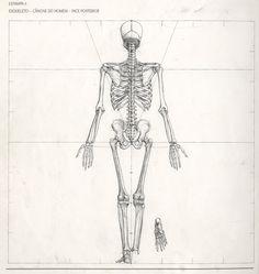 esqueleto11.jpeg (1433×1516)