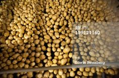 Stock Photo : Potatoes being processed on potato farm