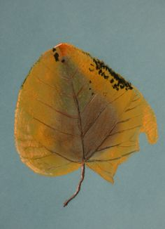 Chalk leaf. Leaf Drawing, Painting & Drawing, Art Ideas, Leaves, Paintings, Drawings, Animals, Animales, Paint