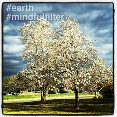 Nature walk snap from our MindfulFilter pal, Kae Collins. #instagram #mindfulfilter #photography