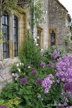 Love all the purple, especially the allium.   All set against the stone.