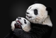 36 Best Animals Wallpapers Images Animal Wallpaper Wallpaper
