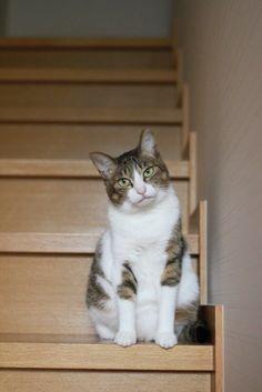 里親さんブログ凛々しいキジシ - http://iyaiya.jp/cat/archives/75919