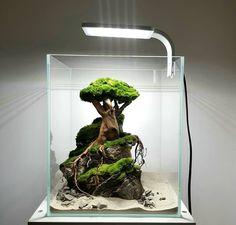 Aquarium Garden, Aquarium Landscape, Aquarium Setup, Aquarium Design, Aquarium Fish, Garden Ideas Homemade, Home Hydroponics, Nano Cube, Turtle Habitat
