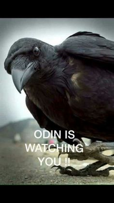 Odin is watching