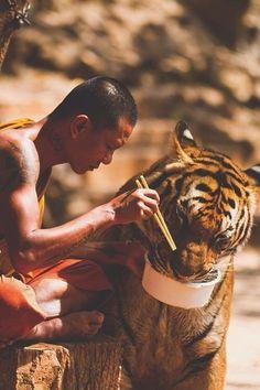 тигр и монах.