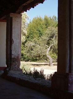cherry tree from portico at La Purisima Mission, near Lompoc, CA Golden Hill, California Missions, Central Coast, Cherry Tree, Oak Tree, Santa Barbara, Vineyard, World, Plants