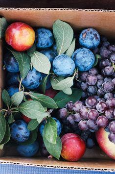 Rhubarb Syrup, Rhubarb Soda, and a Rhubarb Mule - Información de vida saludable 2020 Fruit And Veg, Fruits And Vegetables, Fresh Fruit, Macaroon Cake, Rhubarb Syrup, Stone Fruit, Macaroons, Food Styling, Plum