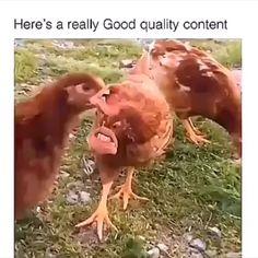 ‼ ️ gackern, gackern, gackern, C L U C K‼‼ - Memes Stupid Funny, Haha Funny, Funny Cute, Funny Jokes, Funny Chicken Memes, Hilarious Stuff, Memes Humor, Funny Tweets, Funny Animal Memes