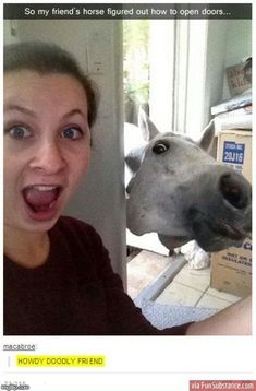 Enjoy the meme 'Lel' uploaded by The_Raggedy_Man. Memedroid: the best site to see, rate and share funny memes! Funny Horse Memes, Funny Horses, Funny Animal Memes, Funny Animal Pictures, Cute Funny Animals, Funny Cute, Funny Memes, Hilarious Pictures, Scary Funny