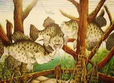 Captivating Crappies ~ by Bruce Bley on Fine Art America.