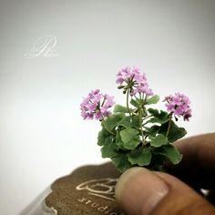 Miniature Rosy