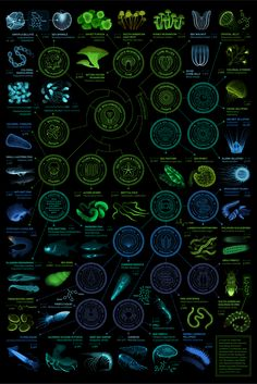A visual compendium of glowing creatures: from TabletopWhale.com