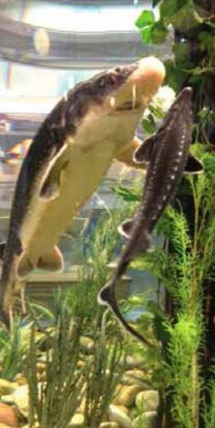 The Aquaculturists: 27/02/2015: Fish and more at EuroTier 2014
