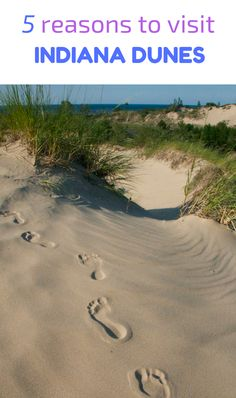 The best things to do at Indiana Dunes.
