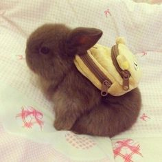 A Bunch of Adorable Photos of Bunnies (and Pups & Kitties too). Enough Said.