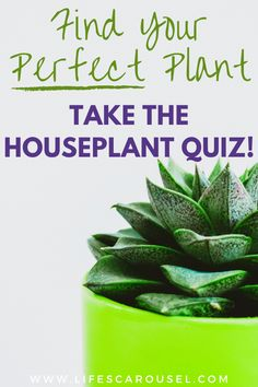 Not sure which type of houseplant to get? Take this houseplant quiz to find your PERFECT match! Answer these easy questions to find the right plant for you! Home Design, Quiz Design, Growing Vegetables Indoors, Indoor Plants, Indoor Gardening, Potted Plants, Types Of Houseplants, Easy Plants To Grow, Low Light Plants