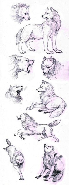 Drawing Animals Ideas How to draw a wolf - different poses: howling, lying, standing - Animal drawing reference - Animal Sketches, Animal Drawings, Cool Drawings, Drawing Sketches, Drawing Animals, Sketching, Drawing Poses, Painting & Drawing, Drawing Tips