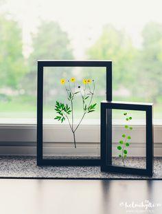 DIY - Transparent paintings of pruned plants