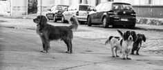 stray dogs chile - Google Search