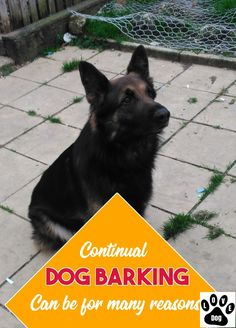Get The Know How Of Dog Barking #dogbarking Stop Dog Barking, Love Pet, Pets, Animals And Pets