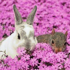 Bunny & Squirrel