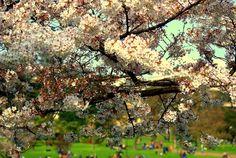 floweringtree