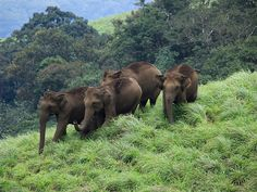 Idukki Wildlife Sanctuary - in Kerala, India