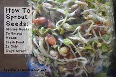 How To Sprout Seeds: Storing Seeds To Sprout Means Fresh Food Is Only Days Away! - Are We Crazy, Or What?