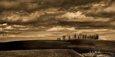 landscapes of trees in the distance - Google Search
