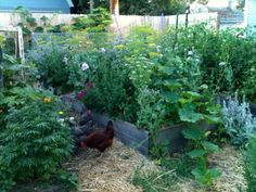 backyard permaculture - Google Search