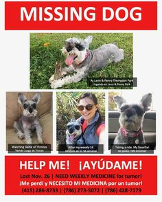 #Miami peeps please share and help us get this #schnauzer home for the holidays. Lost near Larry and Penny Thompson Park in #south Dade. #drkupkee #sabalchasevet #sabalchaseanimalclinic #veterinarian #lost #lostdog #lostpet #wednesday #pets #dogs