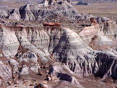 Painted-Desert with Logs of Petrified Wood. Arizona, USA