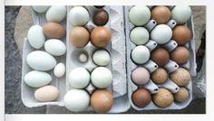 Egg Variety, from Leaf Magazine, Volume 1.
