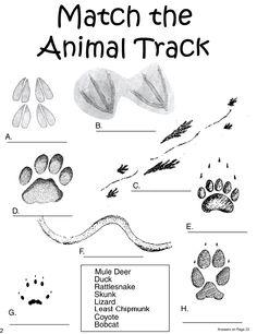 Match the Animal Track - Sacagawea Nature Activities, Fun Activities For Kids, Science For Kids, Science Activities, Science And Nature, Winter Activities, Science Experiments, Outdoor Activities, 1st Grade Science