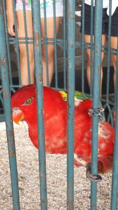 You talk? Parrot, Wildlife, Animals, Parrot Bird, Animales, Animaux, Parrots, Animais, Animal