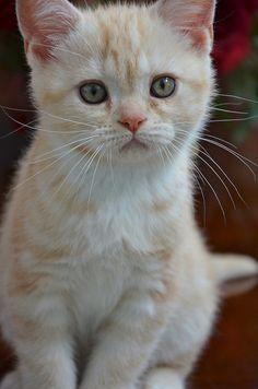 """Kittens will make your sad go away."" --David Wong"