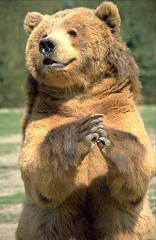 скачать игру happy bear