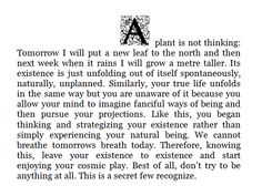 We cannot breathe tomorrows breath today. #plant #spirit