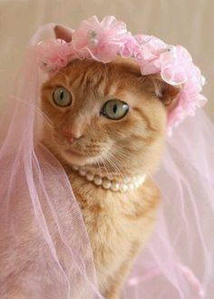 pretty in pink - ginger cat
