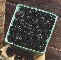 Alabama State Fruit - Blackberry