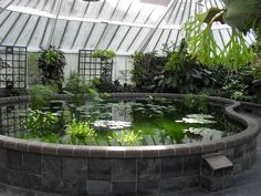 greenhouse with a pond... that'll keep the herons from eating my koi...!