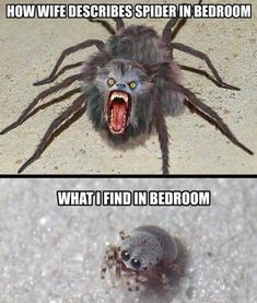 Funniest Animal Memes Of The Day That Are Extremely Hilarious Pics) – Awed! … Funniest Animal Memes Of The Day That Are Extremely Hilarious Pics) – Awed! Crazy Funny Memes, Really Funny Memes, Funny Love, Stupid Funny Memes, Funny Relatable Memes, Haha Funny, Funny Quotes, Funny Spider Memes, Funny Men